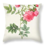 Rosa Pimpinellifolia Flore Variegato  Throw Pillow by Pierre Joseph Redoute