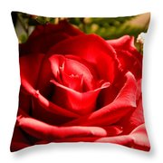 Rose for My Valentine Throw Pillow by Thomas R Fletcher