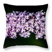 Rows And Flows Of Angel Flowers Throw Pillow by John Haldane