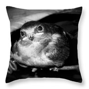 Rusted Perch - Baby Barn Swallow  Throw Pillow by Christena  Stephens