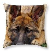 Sable German Shepherd Puppy Throw Pillow by Sandy Keeton