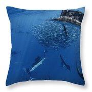 Sailfish Drive Their Prey Throw Pillow by Paul Nicklen