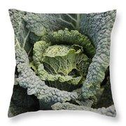 Savoy Cabbage In The Vegetable Garden Throw Pillow by Carol Groenen
