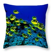 Schooling Raccoon Throw Pillow by Dave Fleetham - Printscapes
