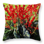 Seasons Greetings Throw Pillow by Xueling Zou