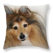 Sheltie Dog - A Sweet-natured Smart Pet Throw Pillow by Christine Till