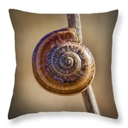 Snail On A Stick Throw Pillow by Kelley King