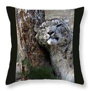Snow Leopard Throw Pillow by Karol  Livote