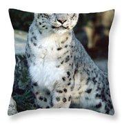 Snow Leopard Uncia Uncia Portrait Throw Pillow by Gerry Ellis