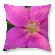 Soft Light On Nootka Rose Rosa Nutkana Throw Pillow by Ralph Lee Hopkins