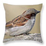 Sparrow Throw Pillow by Melanie Viola