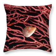 Spotted Boxfish Hides In Red Sea Fan Throw Pillow by James Forte