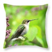Spring Beauty Ruby Throat Hummingbird Throw Pillow by Christina Rollo