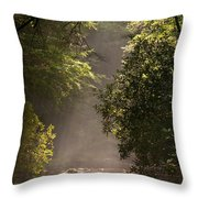 Stream Light Throw Pillow by Steve Gadomski