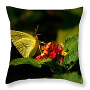 Sulpher Butterfly on Lantana Throw Pillow by Douglas Barnett