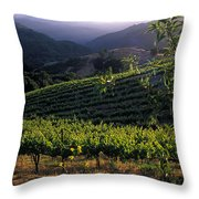 Summer Vineyard Throw Pillow by Kathy Yates