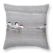 Terns Wading Throw Pillow by Al Powell Photography USA