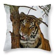 Tiger 3 Throw Pillow by Ernie Echols