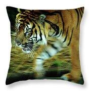 Tiger Burning Bright Throw Pillow by Rebecca Sherman