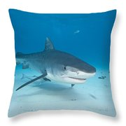 Tiger Shot Throw Pillow by Dave Fleetham - Printscapes