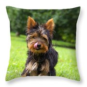 Toby In The Startup ...  Throw Pillow by Angela Doelling AD DESIGN Photo and PhotoArt