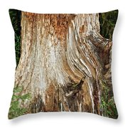 Trees On The Trails - Olympic National Park Wa Throw Pillow by Christine Till