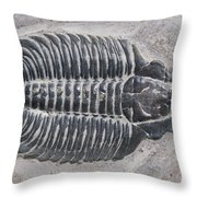 Trilobite Throw Pillow by Robert J Erwin and Photo Researchers