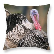 Turkey Throw Pillow by Bill Brennan - Printscapes