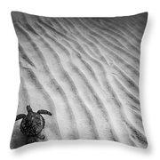 Turtle Ridge Throw Pillow by Sean Davey