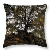Under Spanish Moss Throw Pillow by David Lee Thompson