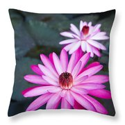 Vibrant Waterlilies Throw Pillow by Dana Edmunds - Printscapes