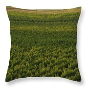Vineyards In The Mendoza Valley Throw Pillow by Michael S. Lewis