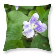 Violet 1 Throw Pillow by Anna Villarreal Garbis