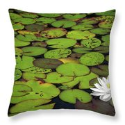 Water Lily Throw Pillow by Elisabeth Van Eyken