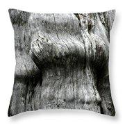 Western Red Cedar - Thuja Plicata - Olympic National Park Wa Throw Pillow by Christine Till