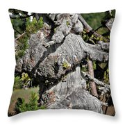 Whitebark Pine Tree - Iconic Endangered Keystone Species Throw Pillow by Christine Till