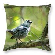 Wild Birds - Gray Catbird Throw Pillow by Christina Rollo