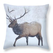Winter Bull Throw Pillow by Mike  Dawson