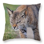 Young Bobcat 03 Throw Pillow by Wingsdomain Art and Photography