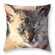 Young Bobcat 04 Throw Pillow by Wingsdomain Art and Photography