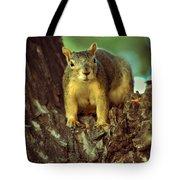 Fox Squirrel Tote Bag by Robert Bales