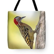 Hispaniolan Woodpecker Tote Bag by Jim Nelson