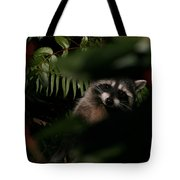 I Can See You  Mr. Raccoon Tote Bag by Kym Backland