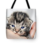 Kitten In A Hand Tote Bag by Susan Leggett