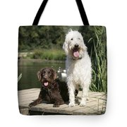 Chocolate And Cream Labradoodles Tote Bag by John Daniels