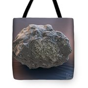 Dormant Water Bear Tote Bag by Eye of Science and Science Source
