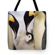 Emperor Penguin Parents With Chick Tote Bag by Konrad Wothe