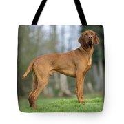 Hungarian Vizsla Dog Tote Bag by John Daniels