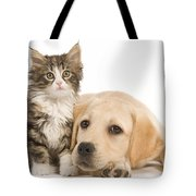 Labrador And Forest Cat Tote Bag by Jean-Michel Labat