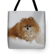 Pomeranian In Snow Tote Bag by John Shaw